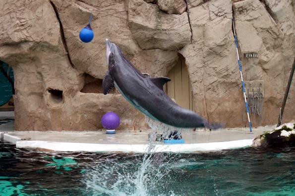Im Delfinarium begeistern die Delfine mit grandiosen Sprüngen das Publikum. (Foto: Karsten-Thilo Raab)
