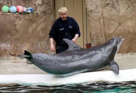 Tierpfleger erklären die Lebensweise der Delfine im Rahmen der Shows. (Foto: Karsten-Thilo Raab)