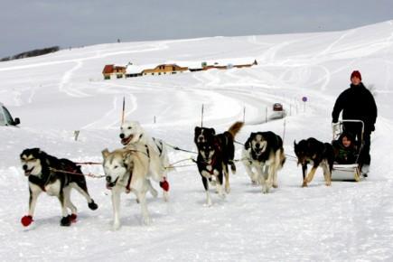 Auch Hundeschlittentouren werden in der Franche Comté angeboten.
