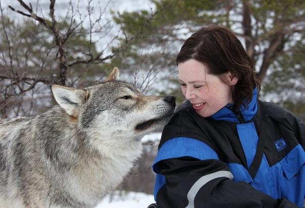 Ganz auf Schmusekurs: Ein Wolf im Polar Park in  Bardu. (Foto: Roger Johansen)