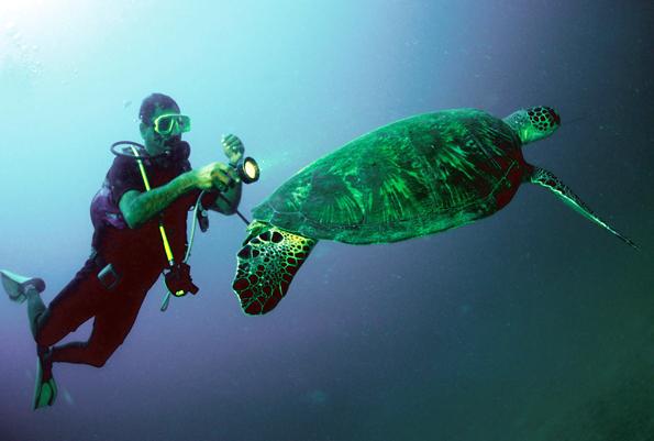 An den Küsten Omans leben viele Wassertiere, die sich bei einem Tauchgang gut beobachten lassen. (Foto: djd)