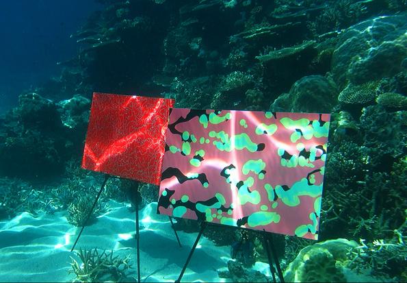 Um die Undersea Art Exhibition vor der Küste von Queensland zu bestaunen, sollte man nicht wasserscheu sein.
