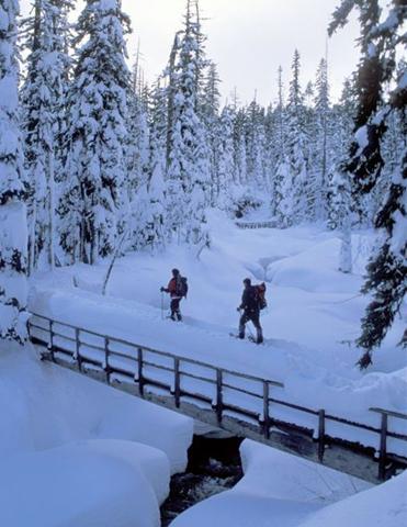 Oregons traumhafte Winterlandschaft lädt zu ausgiebigen Schneeschihwanderungen ein. (Foto: Peter Marbach)