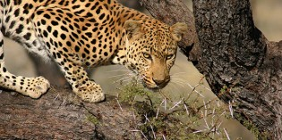 Namibia ist ein Geschenk der Erde