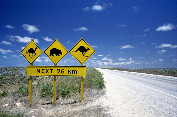 Tierische Begegnungen sind bei Fahrten durch Westaustralien fast schon vorprogrammiert.