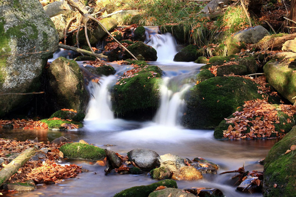 Wunderschön und ursprünglich zeigt sich die Natur im Nationalpark Bayerischer Wald. (Foto: djd)