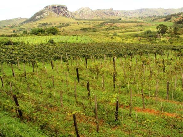 Im Hochland von Fianarantsoa liegen die bedeutendsten Weinanbaugebiete Madagaskars.