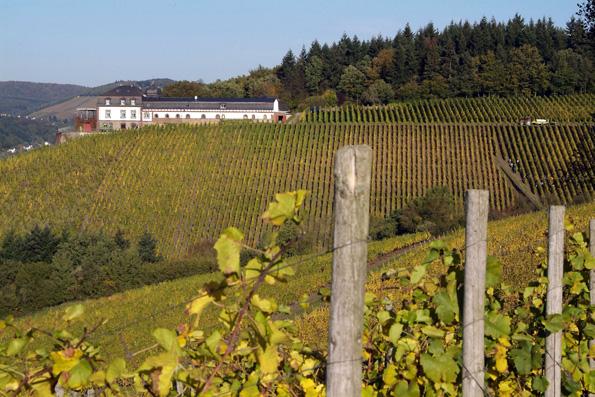 Die Ferienregion Saar-Obermosel ist für ihre landschaftliche Schönheit und edlen Weine bekannt. In den sonnigen Lagen reifen Riesling, Elbling und Burgunder. (Foto: djd)