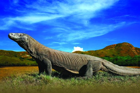 Der Komodo-Nationalpark in Indonesien ist berühmt als Heimat riesiger Warane.