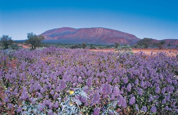 Der  Mount Augustus ist der größte Monolith der Welt.