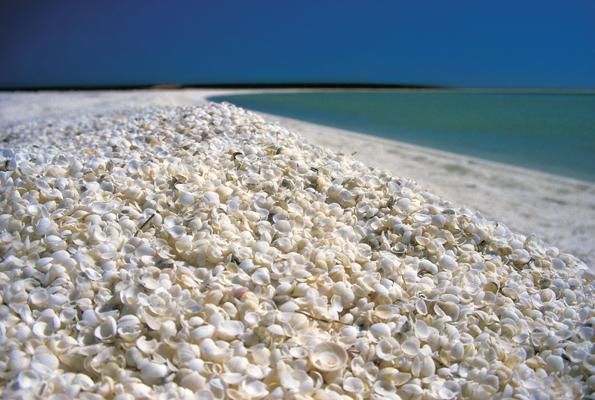 Muscheln soweit das Auge reicht finden sich am Shell Beach in Shark Bay.