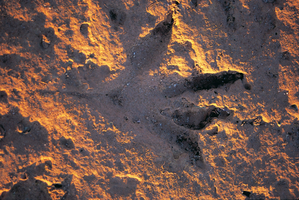 Fußabdrücke aus der Urzeit finden sich am Gantheaume Point in Broome.