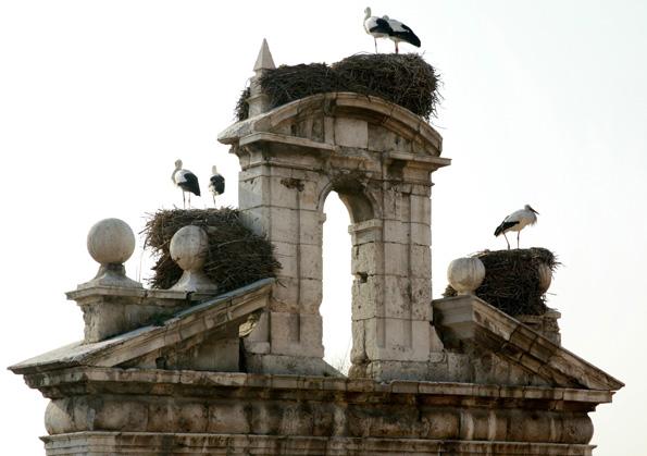 Auf dem Dach der Kirche San Ildefonso haben sich gleich mehrere Storchenpaare eingenistet. (Fotos: Spanisches Fremdenverkehrsamt)