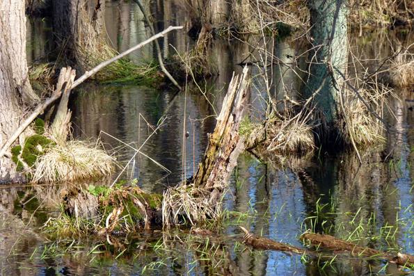 Stiller Zauber: Das Ribnitzer Große Moor ist ein Refugium für seltene Tiere und Pflanzen. (Foto: djd)