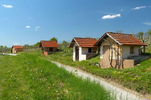 Das Bottwartal zählt zu den schönsten Weinanbaugebieten in Baden-Württemberg und lädt zu genussvollen Wanderungen ein. (Foto: djd)