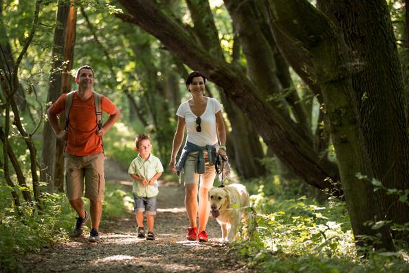 """Der Nationalpark Hainich trägt den Titel Unesco-Weltnaturerbe. Seine urtümliche Bewaldung verlieh ihm auch den Beinamen """"Urwald mitten in Deutschland"""". (Foto: djd)"""