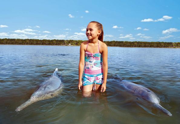 Tierische Begegnungen wie hier an der Tin Can Bay gehören an Australia#s Nature Coast zum Alltag.