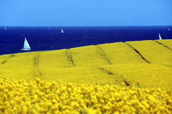 Die Ostseelandschaft hat zu jeder Jahreszeit ihre speziellen Reize - nicht nur wenn der Raps in kräftigem Gelb erblüht. (Fotos: djd)