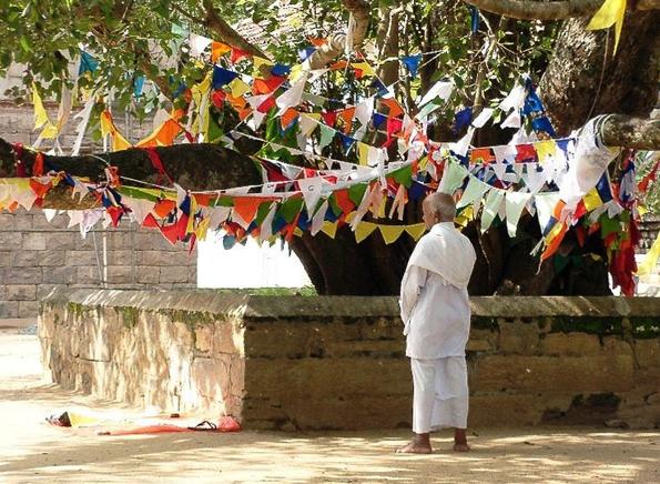 Wichtiger Anlaufpunkt für Buddhisten in Anuradhapura: der Sri Mahabodhi Baum.