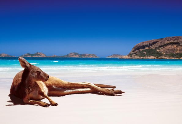 Tierische Begegnung sind an den Stränden Westaustraliens nichts außergewöhnliches.