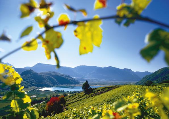 Perfekte Urlaubskulisse in Südtirol: Die sonnigen Weinberge im Süden des Landes rund um den Kalterer See
