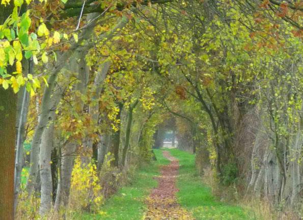 Wild romantisch umrahmt ist der Pilgerweg bei Marienfeld. (Foto: LWL)