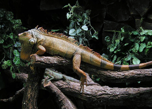 Tierische Begegnungen sind im Parque National de Iguacú an der Tagesordnung. (Foto: Karsten-Thilo Raab)