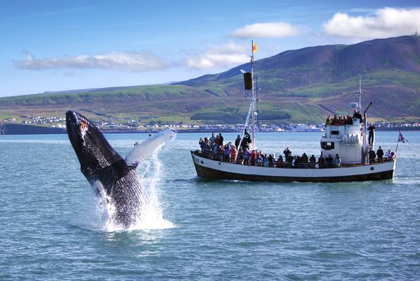 Im Meer rund um Island tummeln sich zahllose Wale, die bei speziellen Bootstouren beobachtet werden können. (Foto: Ragnar Th. Sigurdsson)