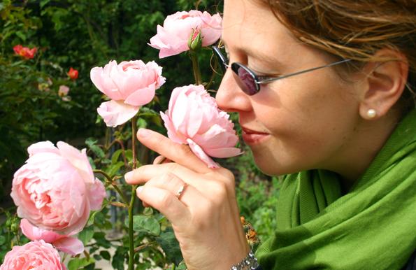 """Pellworm zeigt sich von seiner """"duften"""" Seite, wenn im Juni die traditionellen Rosentage steigen. (Foto: Karsten-Thilo Raab)"""