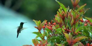 Von wegen flatterhaft: Birdwatching in Panama