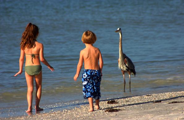 Tierische Begenung am Strand von Treasure Island. (Foto Karsten-Thilo Raab)