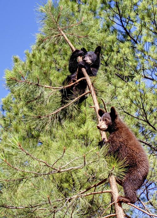 Bärenstark präsentieren sich Arizonas State Parks im wahrsten Sinne des Wortes.