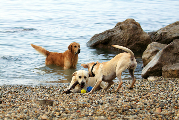 In der Kvarner müssen Wuff und Bello nicht auf ihr Strandvergnügen verzichten.