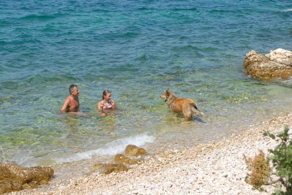 Der Wuff kann, muss aber dem Herrchen in der Kavarner einfach nur beim Schwimmen zuschauen. (Fotos:  TVB Kvarner)
