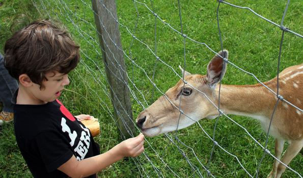 Im Tiergarten in Aulendorf finden sich auch handzahme Rehe. (Foto: Karsten-Thilo Raab)