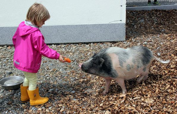 Eine schöne Schweinerei: Fütterstunde in Aulendorf. (Foto: Karsten-Thilo Raab)
