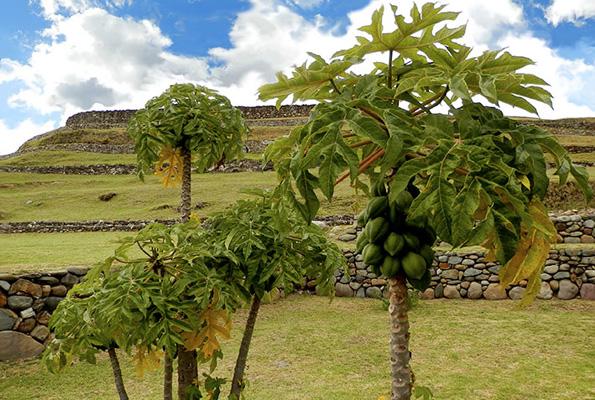 Ein Stück gut erhaltender Inka-Geschichte: Die Pumapungo Terrazas. (Fotos: Fundacion Municipal Cuenca)