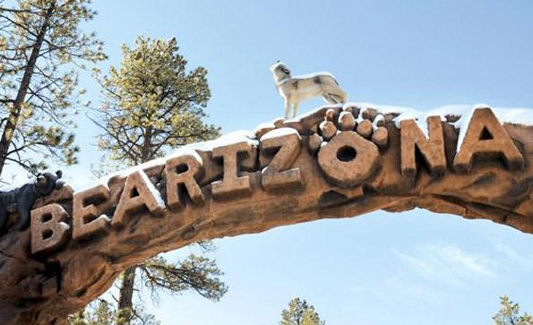 Im Bearizona sind nicht nur Bären zuhause, sondern auch Bison, Wölfe und eine Reihe anderer wilder Tiere.