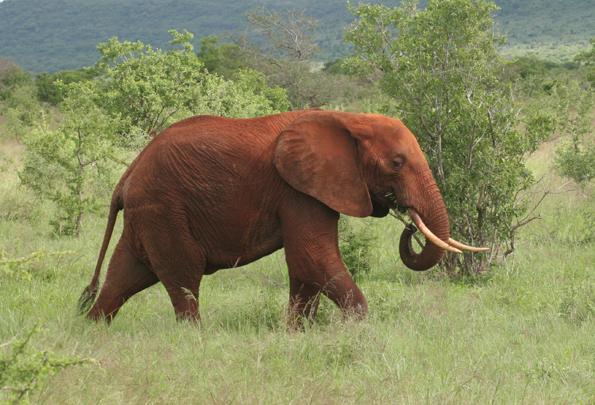 Roter Staub und Elefantenherden sind das Markenzeichen der Taita Hills. (Foto Muriuki Muriithi)