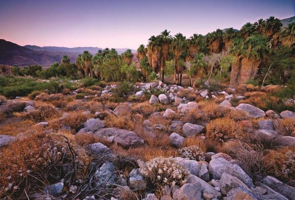 Die Indian Canyons überraschen mit ihrer landschaftlichen Vielfalt.