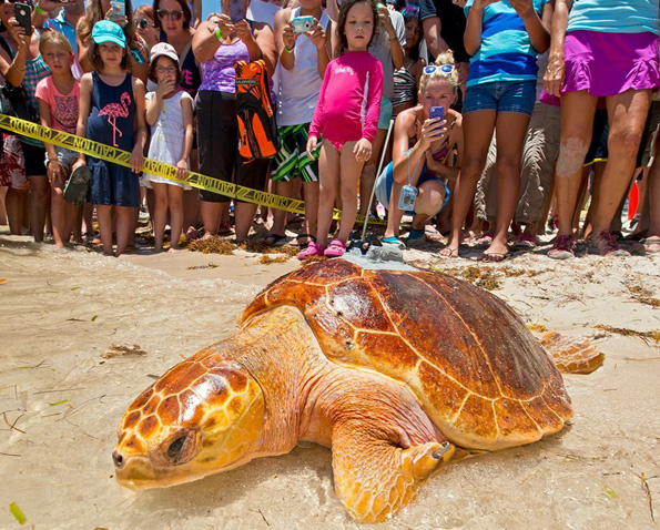 PineTyme bei seiner Freilassung auf Marathon, Florida Keys. (Foto: Florida Keys News Bureau)