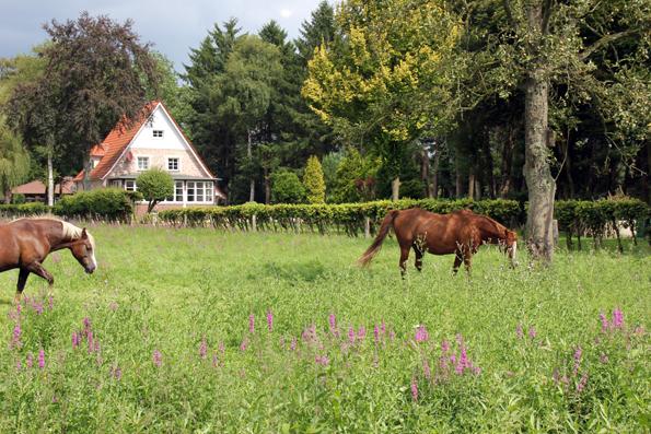 Schön, schöner, Ammerland - keine Frage die Ammerlandroute lässt die Herzen von Naturfreunden höher schlagen. (Foto: Ulrike Katrin Peters)