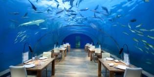 """Dinner unter den Meeresspiegel – Essgenuss im schönsten """"Fischkino"""" der Malediven"""