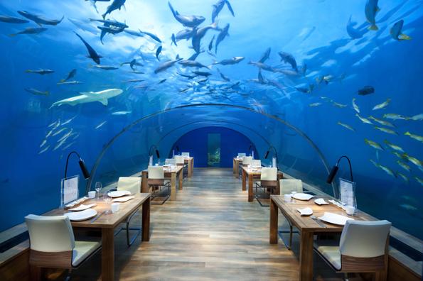 Dinner mit Fischkino: Das Ithaa Unterwasser-Restaurant auf Rangali  kombiniert Essgenuss mit  phantastischen Ausblicken.