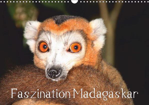 Da, wo der Pfeffer wächst, leben Lemuren - doch dass Madagaskar weit mehr zu bieten hat, zeigt dieser Kalender