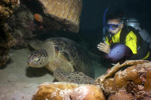 Rund um Mabil Island  können Taucher bisweilen auf Tuchfühlung mit riesiegen Meeresschildkröten gehen.,