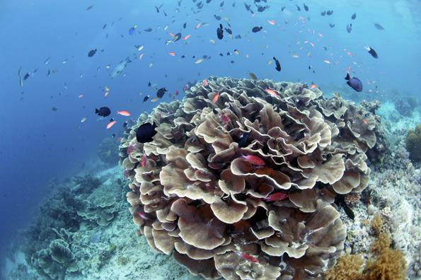 Die Unterwasserwelt vor Sipadan Island in Malaysia besticht durch einen ungeahnten Artenreichtum.