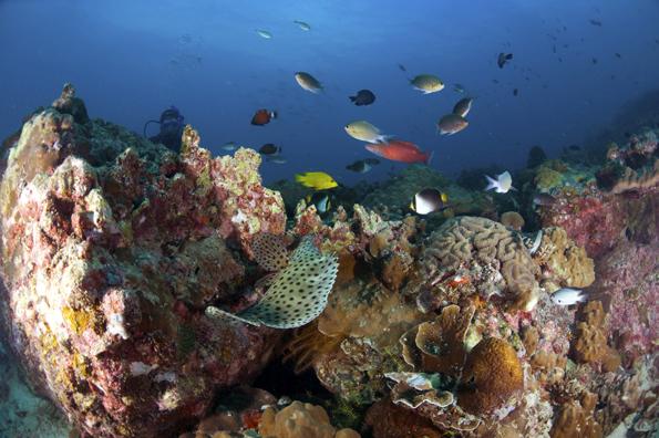 Die Faszination der malayischen Unterwasserwelt lässt sich auch vor Tioman Island erfahren.
