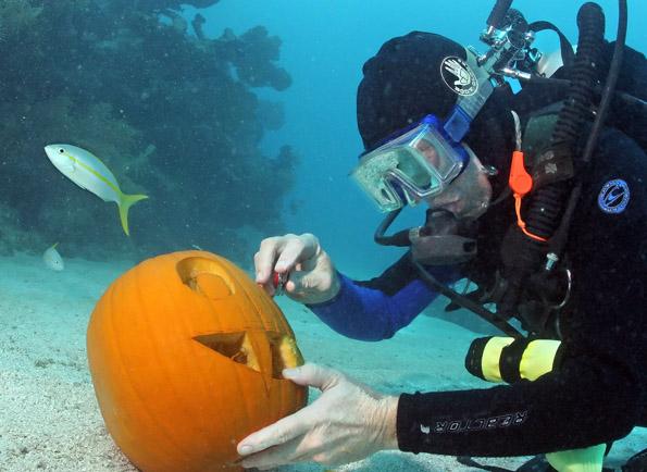 Beim Underwater Pumpkin Carving Contest werden im Meer Kürbissfratzen geschnitzt, die selbst furchtlosen Fischen einen Schrecken einjagen können.