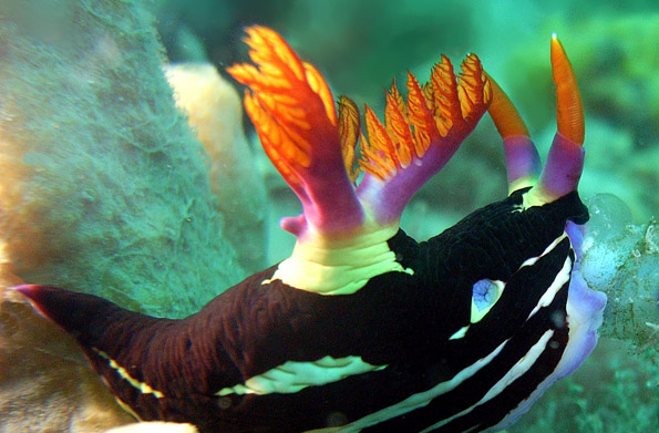 Tauchern offenbart sich vor der Küste Sharjahs eine ungeahnte Artenvielfalt.